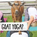 what the heck is goat yoga