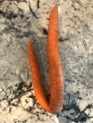 weirdly shaped carrot and potato
